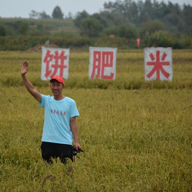 大豆饼肥水稻基地