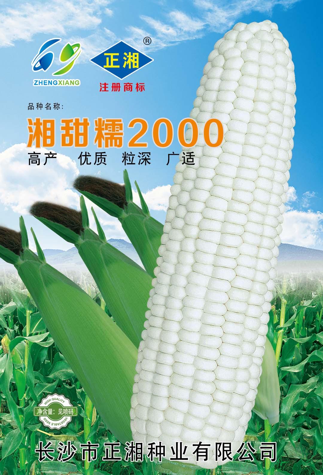湘甜糯2000