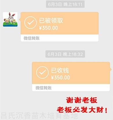 海南赵先生买奇楠枝条一斤