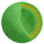 单室脂质体示意图.png