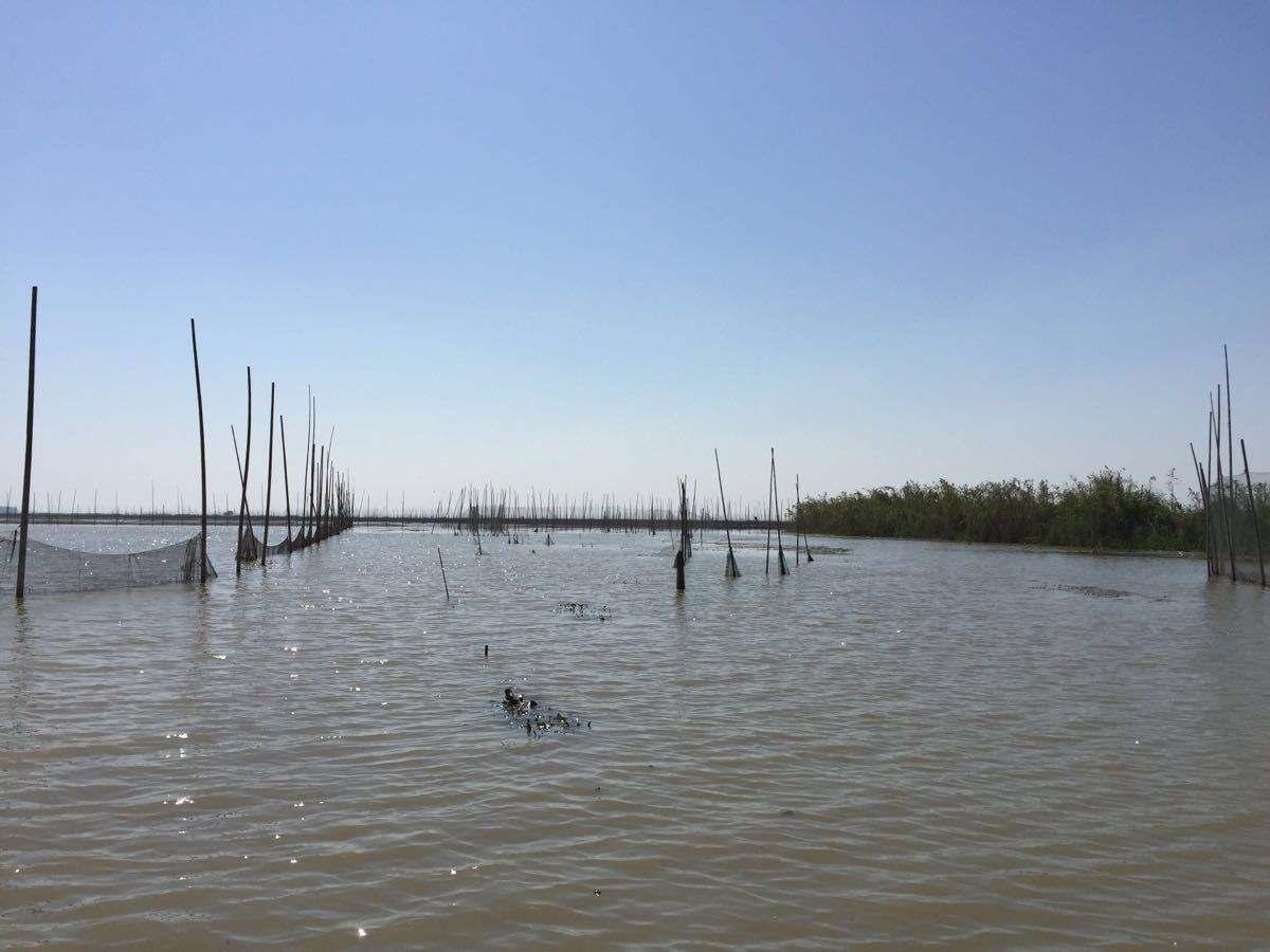 高邮湖美景