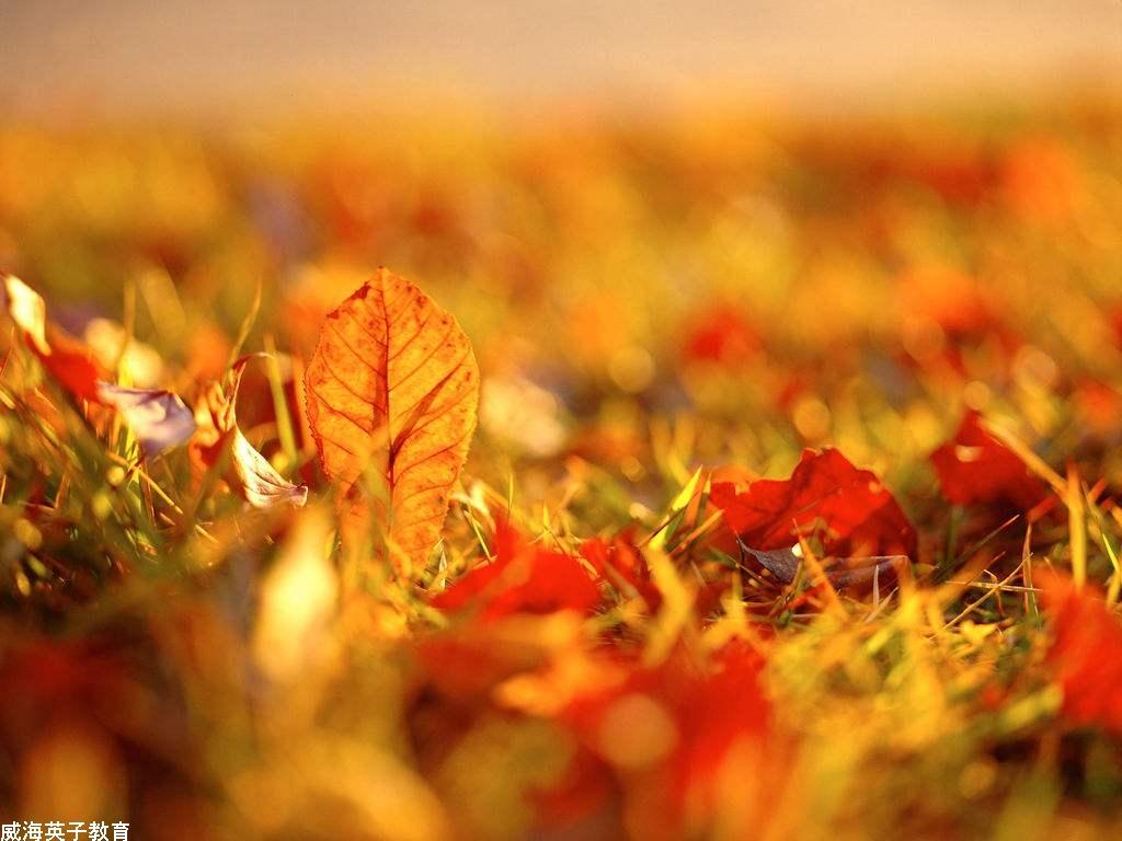 她把凉爽的秋天带来了,她把香甜的水果带来了,她把金黄的颜色也带来了图片