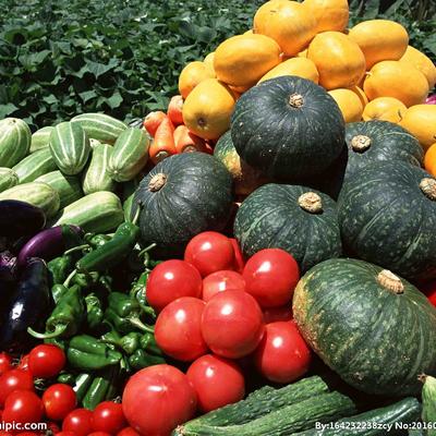 瓜茄类蔬菜